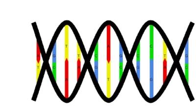 Nucleotide pairing.jpg