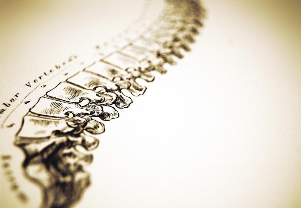 spine-illustration.jpg