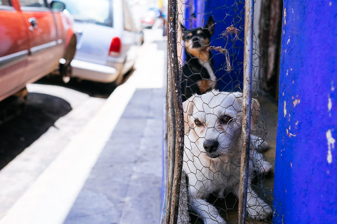 Soo many dogs in windows