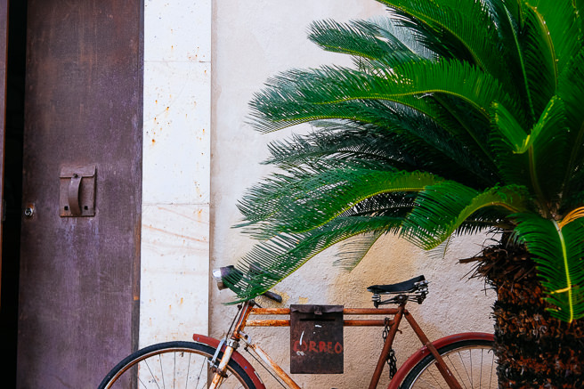 Palm and rusty bike