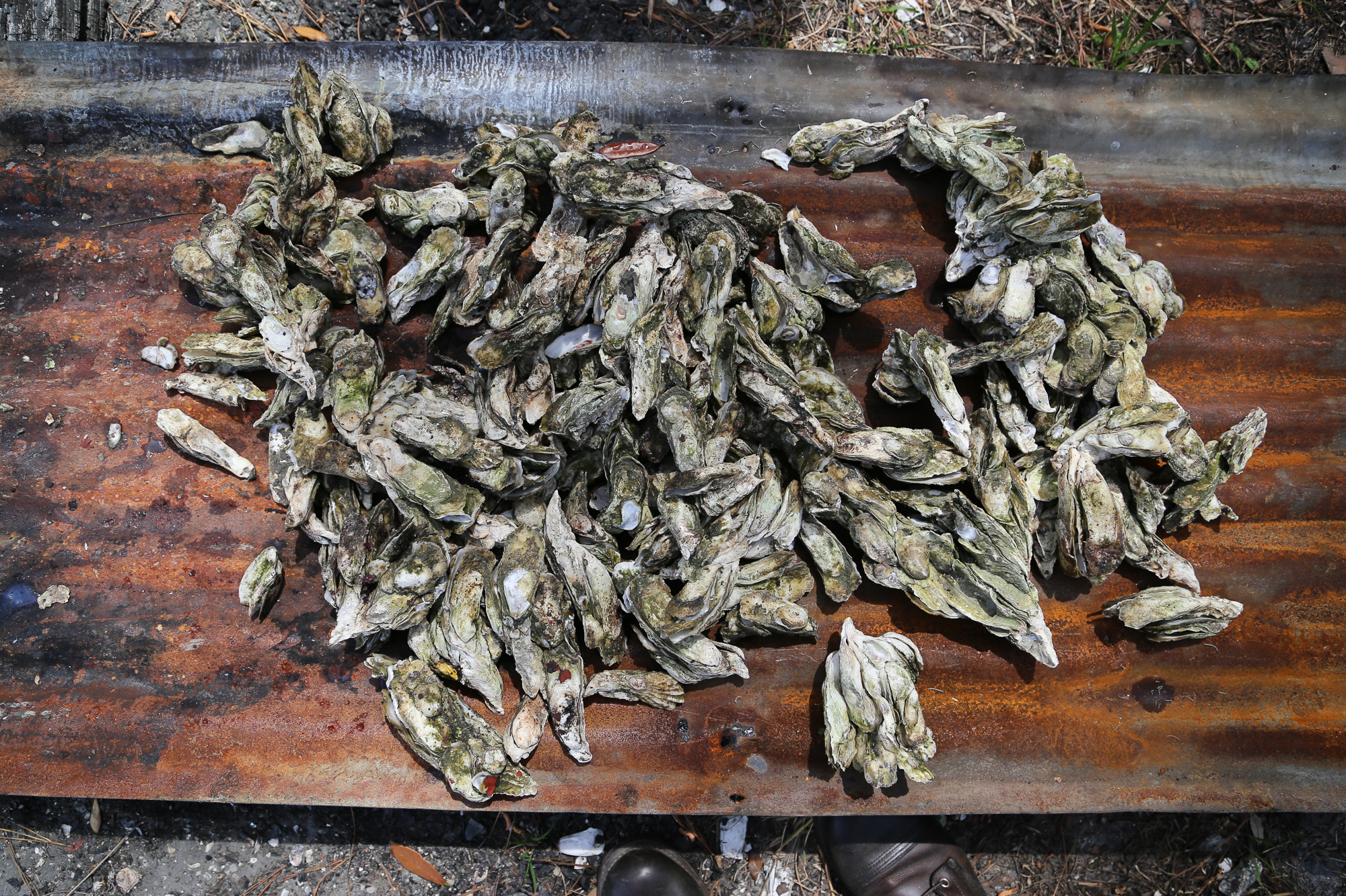 A Continuous Lean   A Lowcountry Oyster Roast