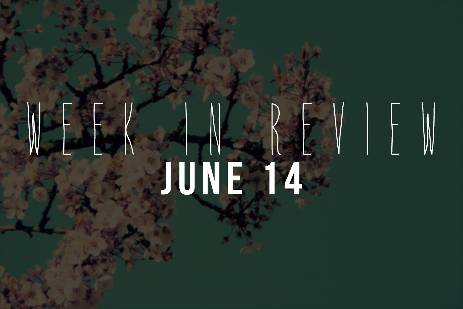 Week in Review | June 14 - Actively Gemma