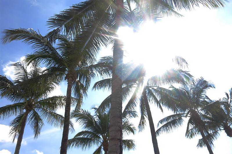 Florida Palms - Actively Gemma