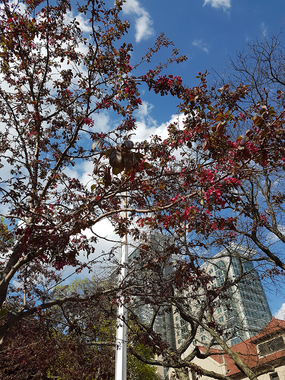 Springtime in Boston (finally)