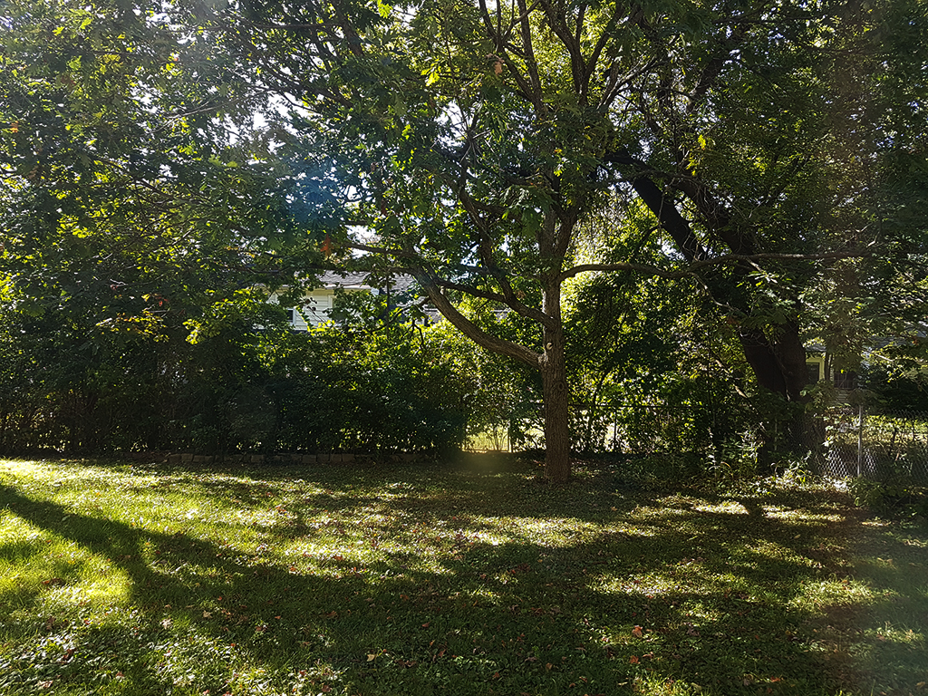 Our backyard on a warm Autumn day