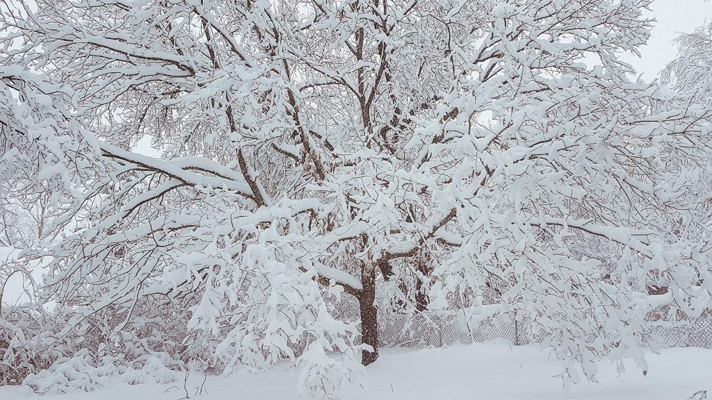 Snowy Day in Syracuse, NY