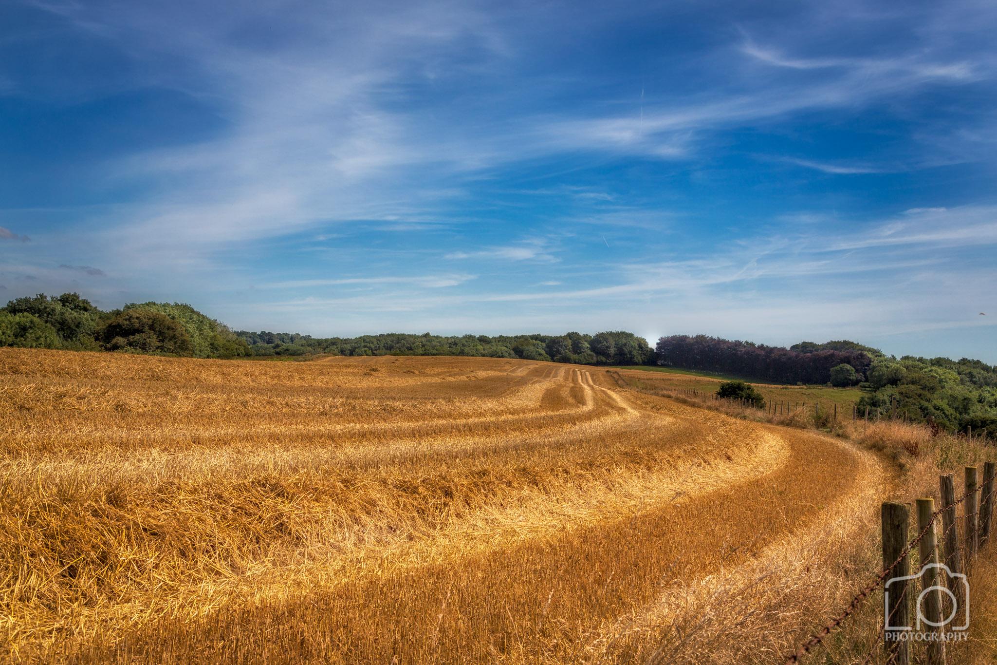 North Downs Way, Kent