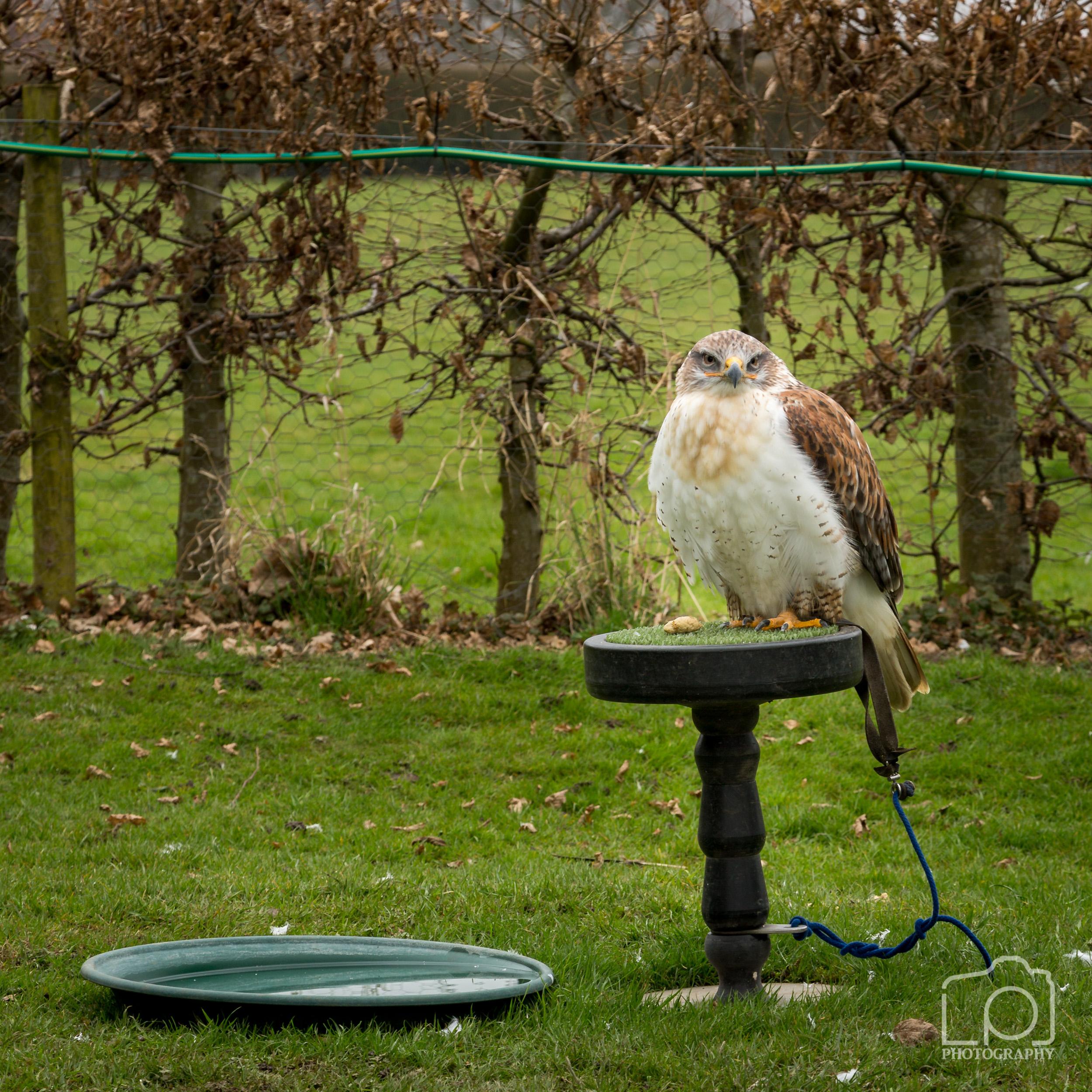 Bird of Prey - 1283