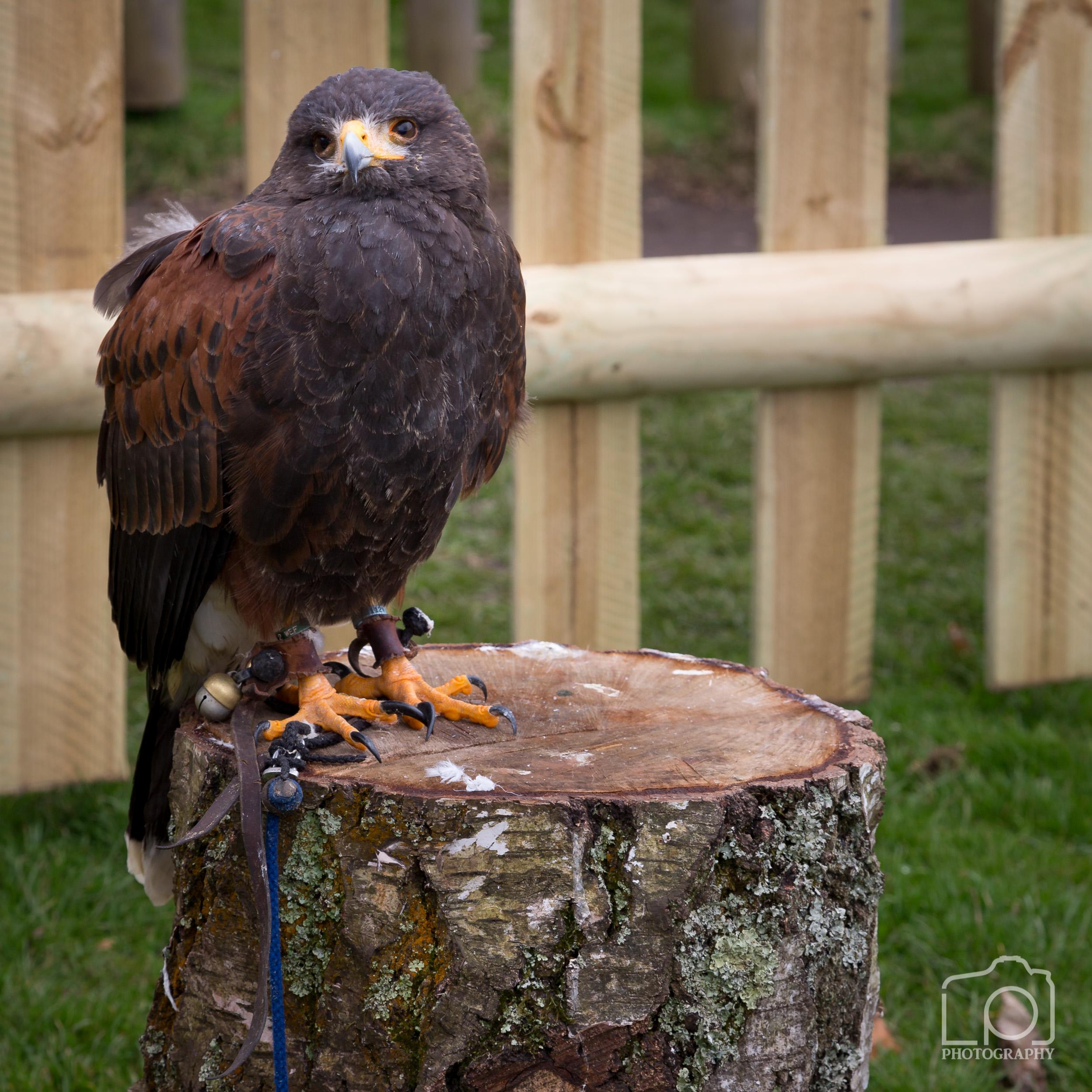 Bird of Prey - 1290