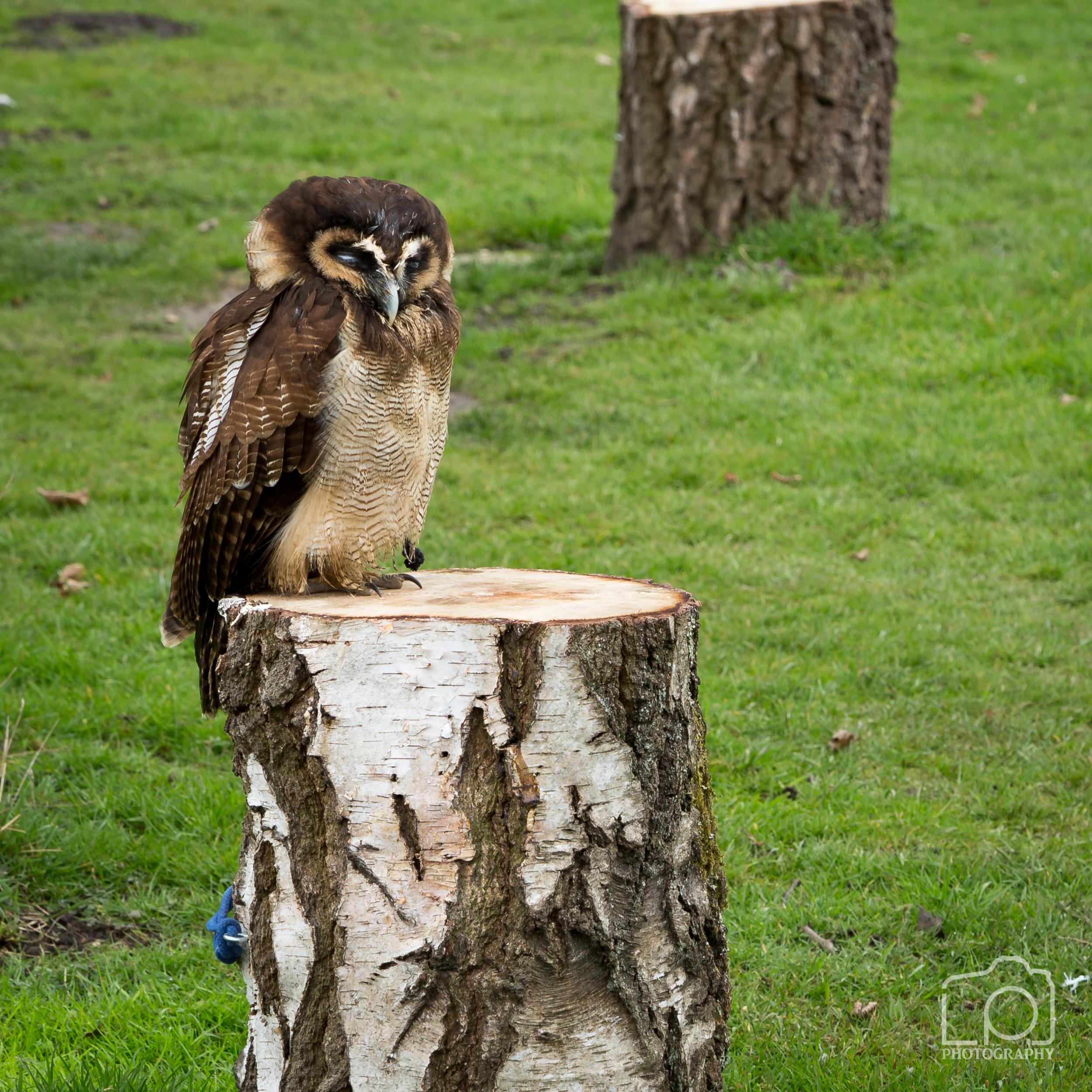 Bird of Prey - 1297