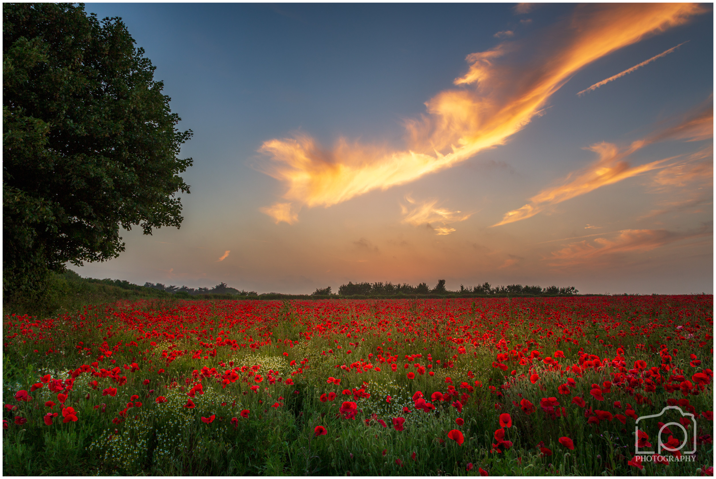 Pineham Poppies at Sunset