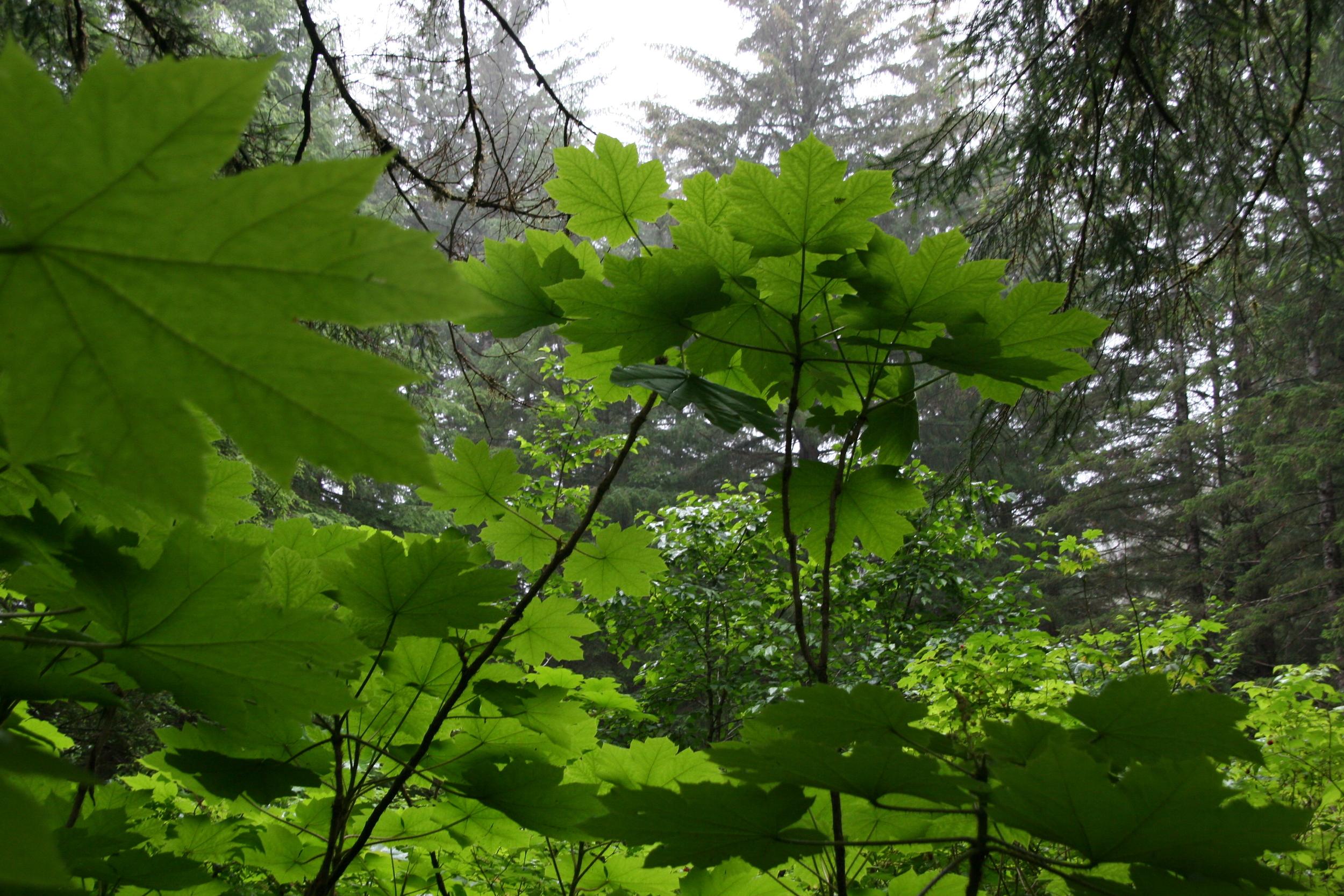 Southeast Alaska Rainforest
