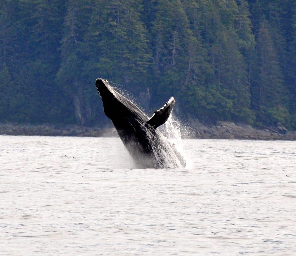 whale-breach.jpg