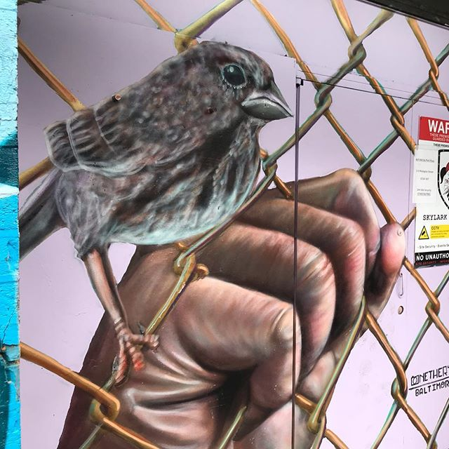Bird on a wire in Shoreditch @nether410
