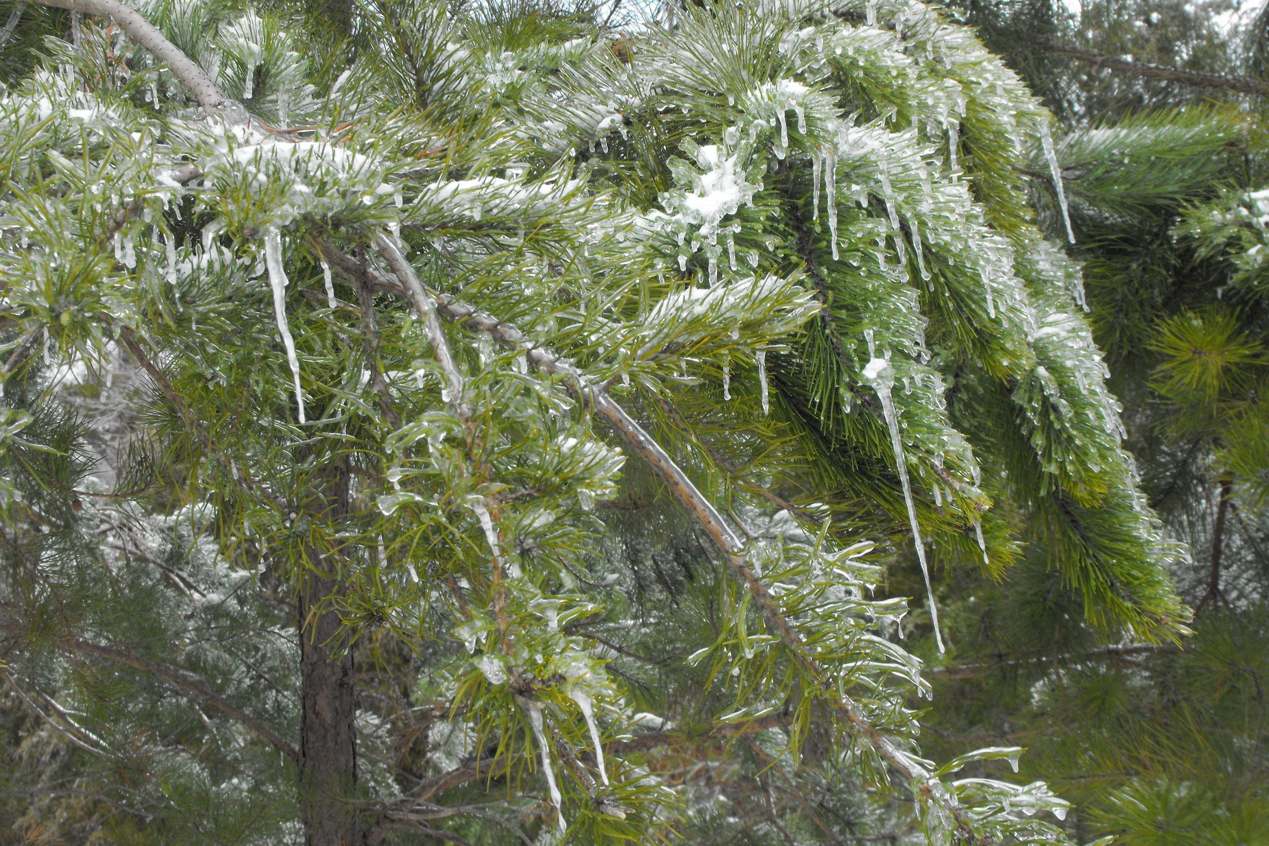 Icy greens3.jpg