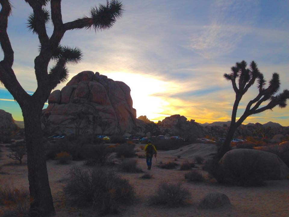 Joshua Trees National Park... appropriately named for all its Joshua Trees.