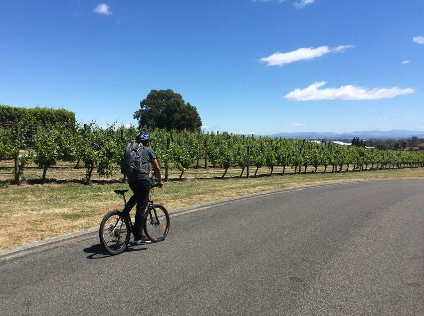 biking-through-vineyards-hawkes-bay-new-zealand-north-island