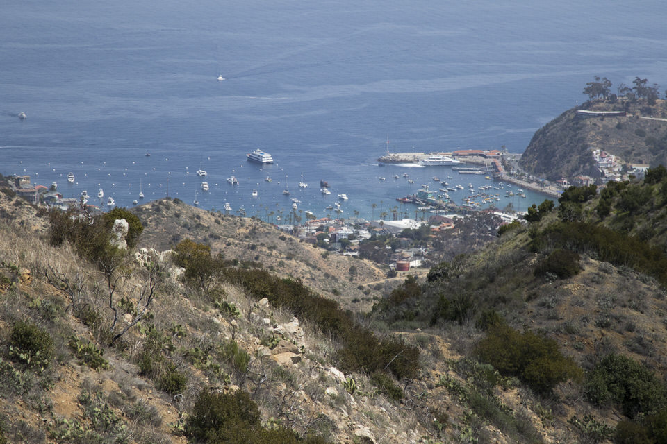 view-of-avalon-from-trans-catalina-trail