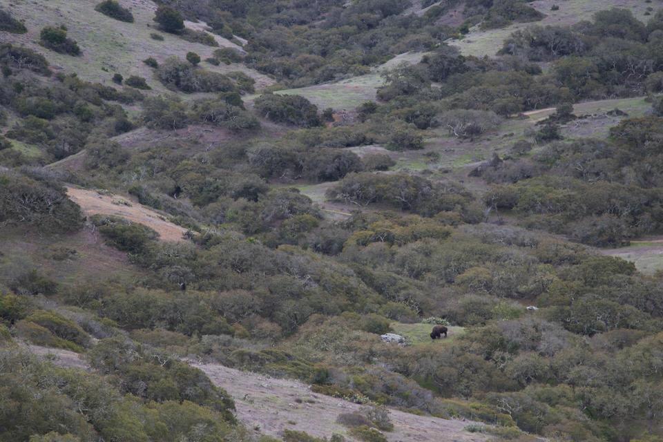 buffalo-trans-catalina-island-trail