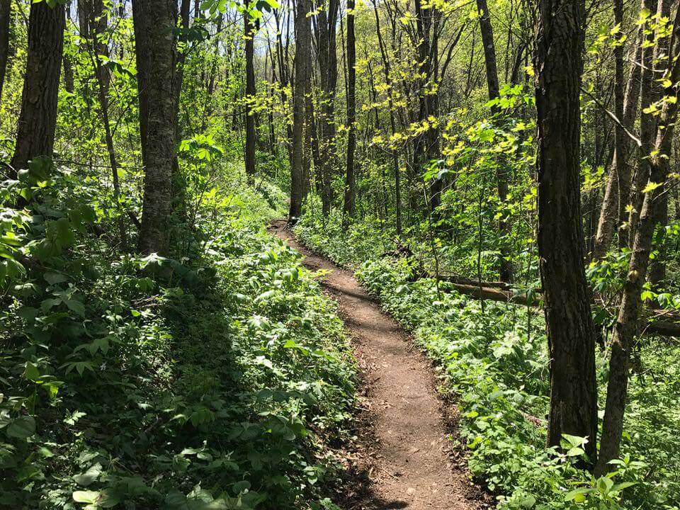 Section of the Appalachian Trail.
