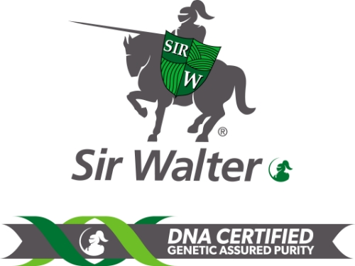SirWalter2016.jpg