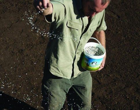 spreading-starter-fertiliser-for-new-lawn-mutf8aihpuqns1clvufsk2dpgbm393jl8mt16fuviw.jpg