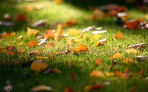 leaves on lawn.jpg