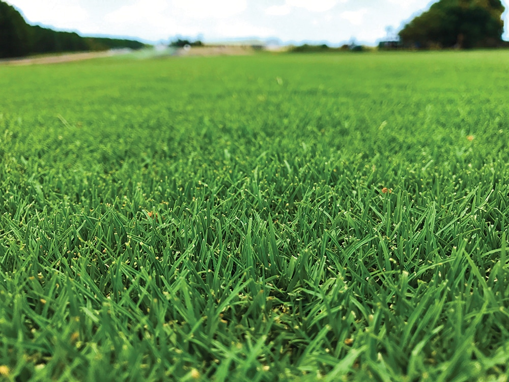 tftuf-grass.jpg