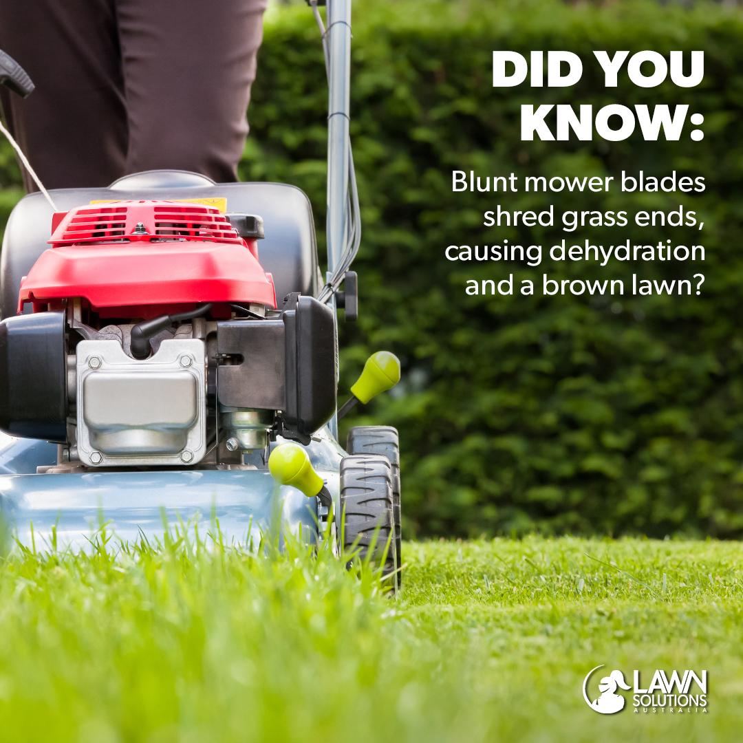 LSA blunt mower.jpg