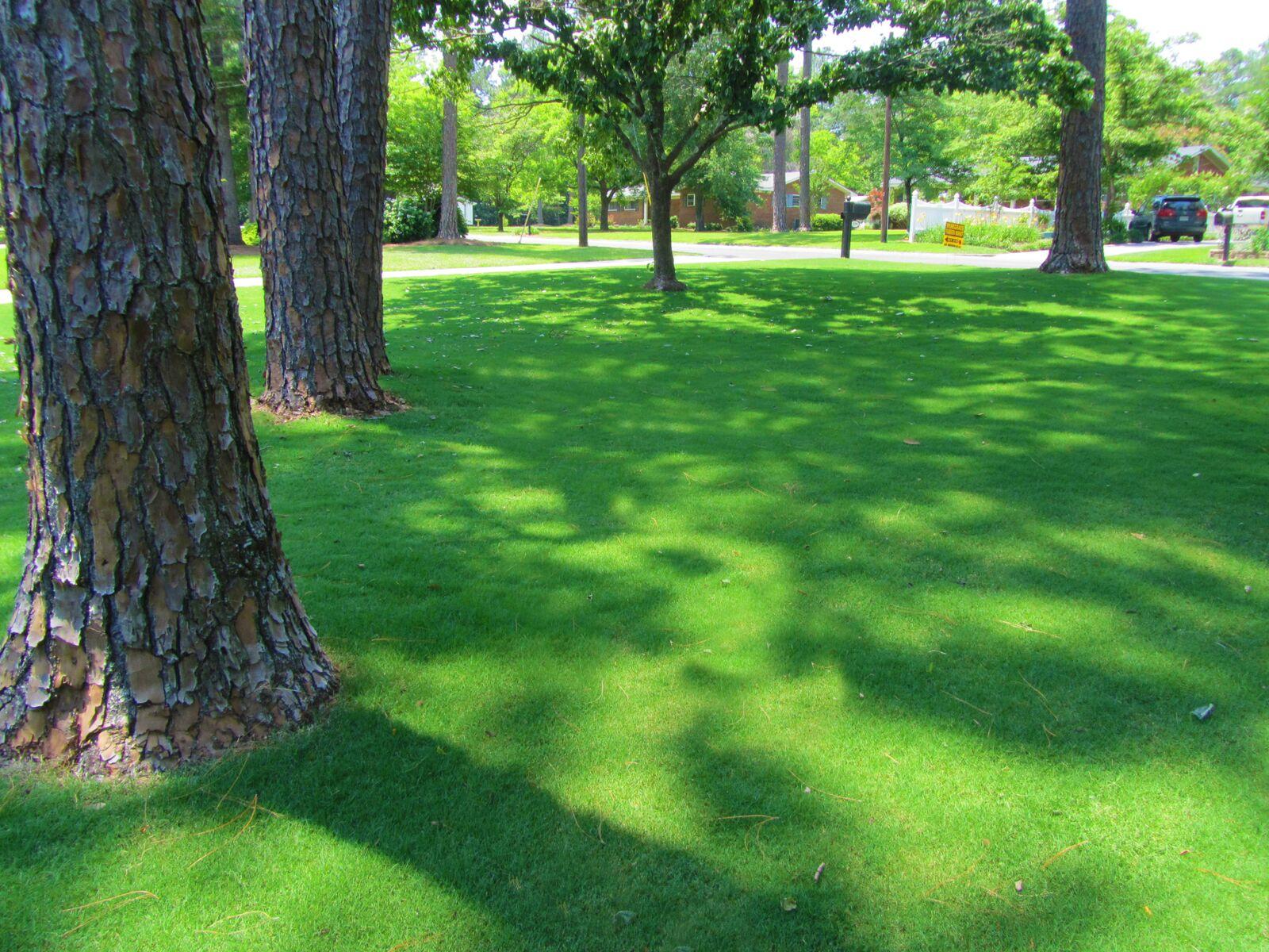 Pic #2 TifTuf home lawn Tifton 2014_preview.jpeg