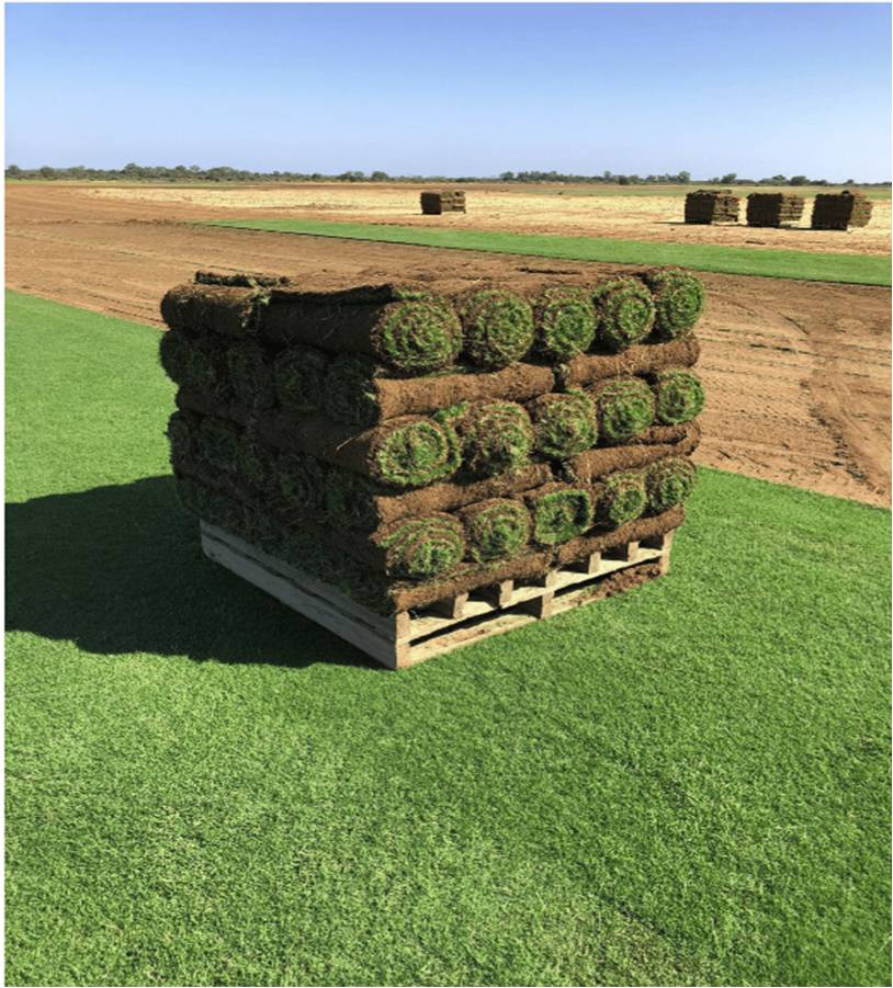 TifTuf being harvested, Superior Lawns Perth, WA