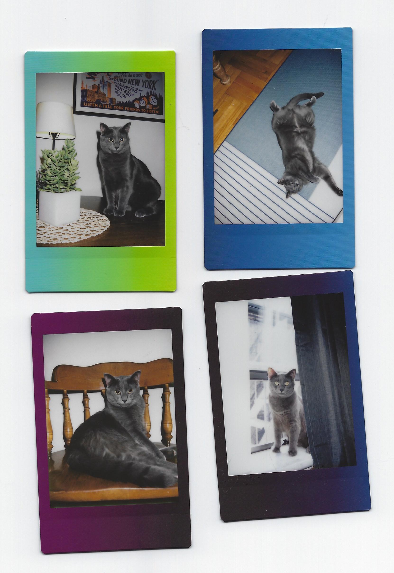 Oliver polaroids.jpeg