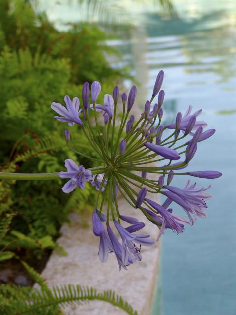 anguilla_gardens_11.jpg