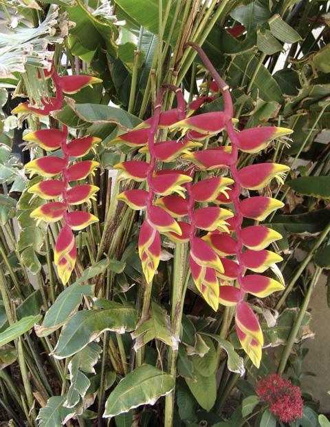 anguilla_gardens_6.jpg