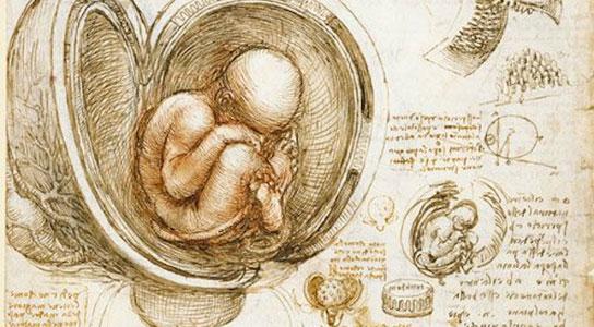 Leonardo Da Vinci. Studies of the Fetus in the Womb. Drawn between 1510-1513.