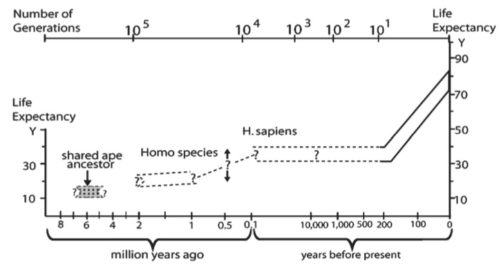 Evolution of the human life expectancy (LE).The LE at birth of the shared great ape ancestor is hypothesized to approximate that of chimpanzees, which are the closest species to humans by DNA sequence data. The LE of chimpanzees at puberty is about 15 years, whereas pre-industrial humans had LE at puberty of about 30 years Since 1800 during industrialization, LE at birth as well as at later ages has more than doubled. LE estimates for ancestral Homo species are hypothesized to be intermediate based on allometric relationships . Ages of adult bones cannot be known accurately after age 30 even in present skeletons .The proportion of adults to juveniles does, however, suggest a shift toward greater LE at birth. The few samples in any case cannot give statistically reliable estimates at a population level. The number of generations is estimated at 25 years for humans.From Finch, C. Evolution of the Human Lifespan, Past, Present, and Future: Phases in the Evolution of Human Life Expectancy in Relation to the Inflammatory Load.    Proceedings of the American Philosophical Society   . 2012:156 (1). 9-44