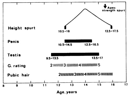 Sequence of events in puberty in girls (top) and boys. From Marshall A. Tanner JM. Variations in the pattern of pubertal changes in boys.    Archives of Disease in Childhood    1970. 45:22.