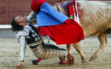 In May 2010  Julio Aparicio  slipped while fighting this half-ton bull.  The horn of the animal tore into the bullfighter's throat and emerged through his mouth.  Aparicio underwent six hours of surgery; doctors performed an emergency tracheotomy and worked to reconstruct his throat, jaw, tongue and the roof of the mouth. But don't worry. He made a full recovery and returned to the bullfighting arena ten weeks after the goring.