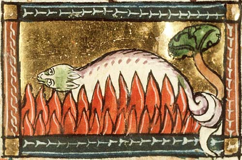 A salamander unharmed in the fire. From Koninklijke Bibliotheek, KB, KA 16, Folio 126r, c 1350. From  here .