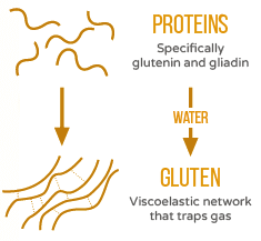 Proteins to Gluten.png