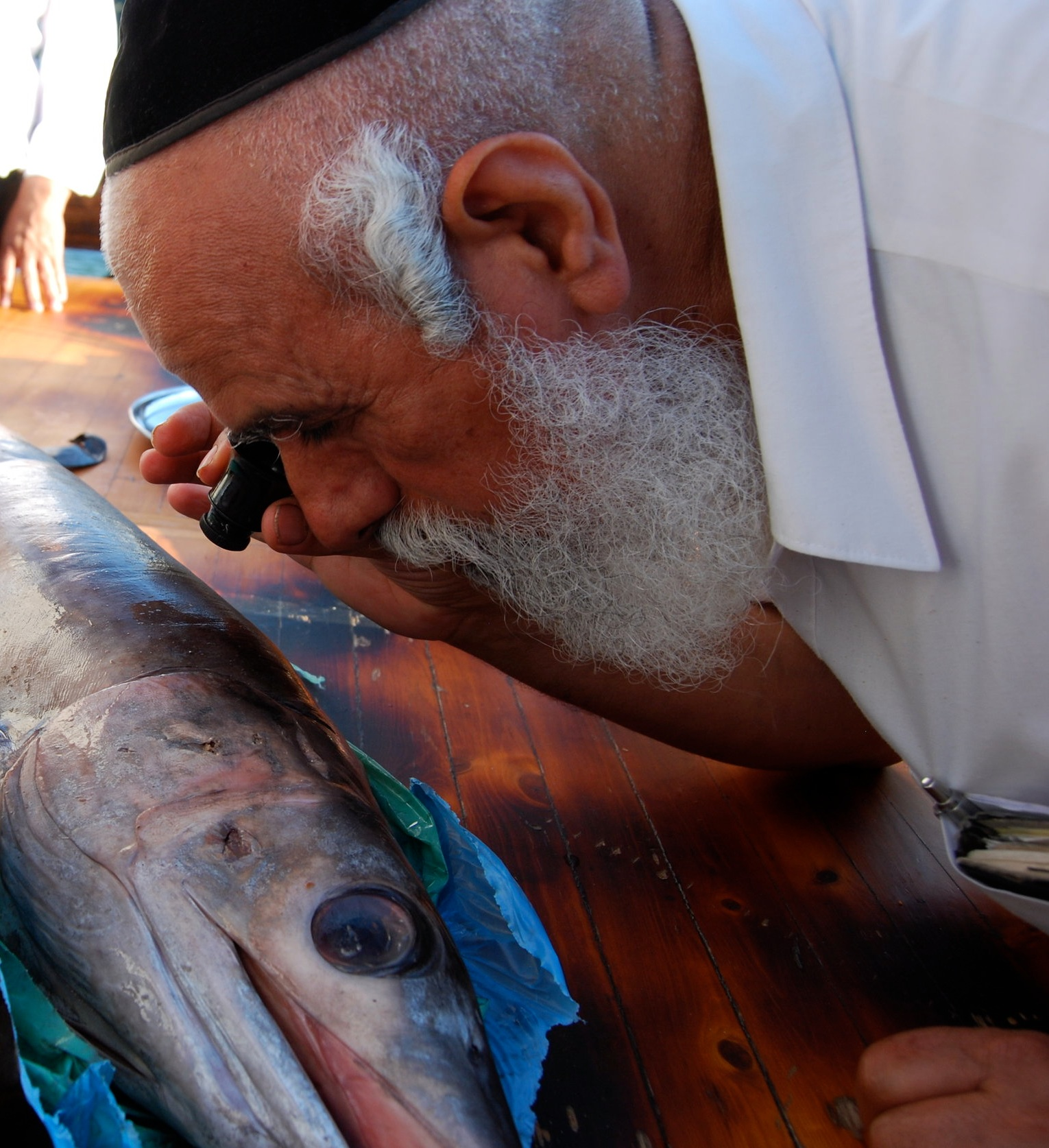 "Rav Shlomo Machfud , Rav of  בד""צ יורה דעה  examining a swordfish for evidence of scales, Tiberias 2010.  © 2010 by David Willner for Foundation Stone. All Rights Reserved."