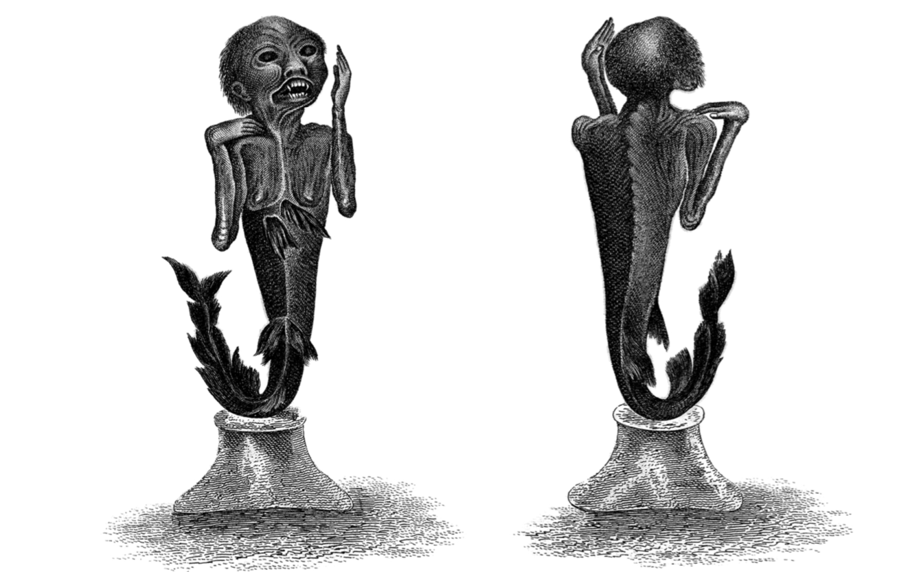 One of the earliest depictions of the specimen that was to become the Feejee Mermaid, in the collections of the British Library (Asia, Pacific & Africa P/T 2937). Courtesy and copyright,The British Library Board. From  Mermaids Uncovered .  Journal of Museum Ethnography , no. 27 (2014), pp. 98-116
