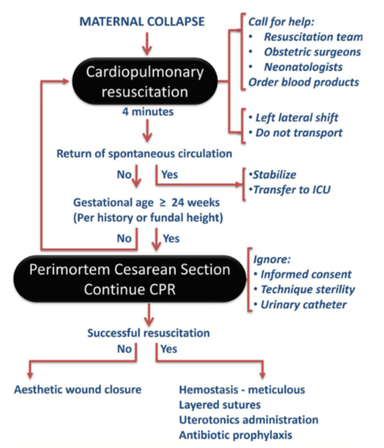 Resuscitation protocol in pregnancy following maternal collapse. From Druker L. et al.  Perimortem cesarean section for maternal and fetal salvage: concise review and protocol.  Acta Obstetricia et Gynecologica Scandinavica 93 (2014) 965–972.