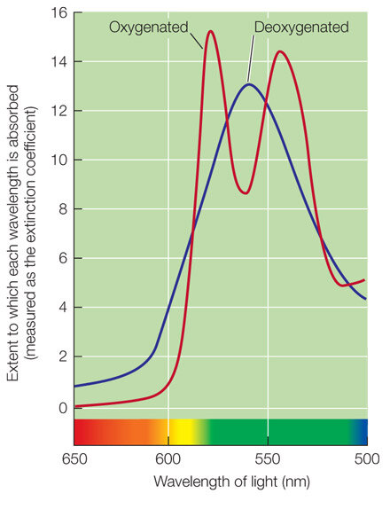 Absorption spectra for fully oxygenated and fully deoxygenated human hemoglobin. From  here .
