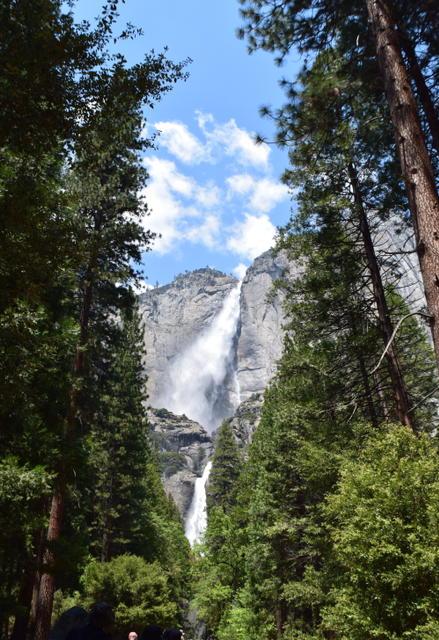 Upper and Lower Yosemite Fall. Photo by Gabriel Manzo.