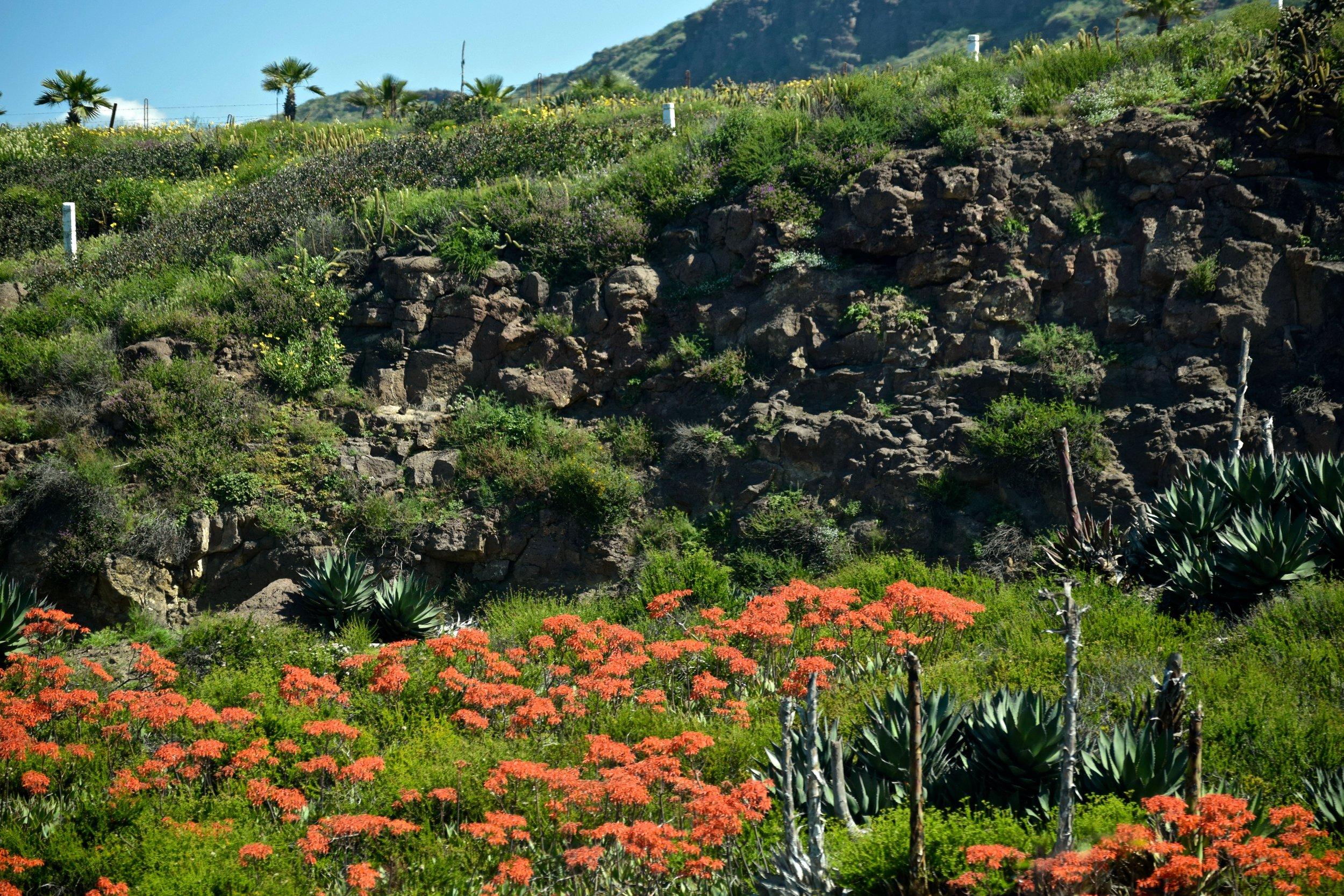 Lush hillside in El Valle de Guadalupe. Photo by Gabriel Manzo.