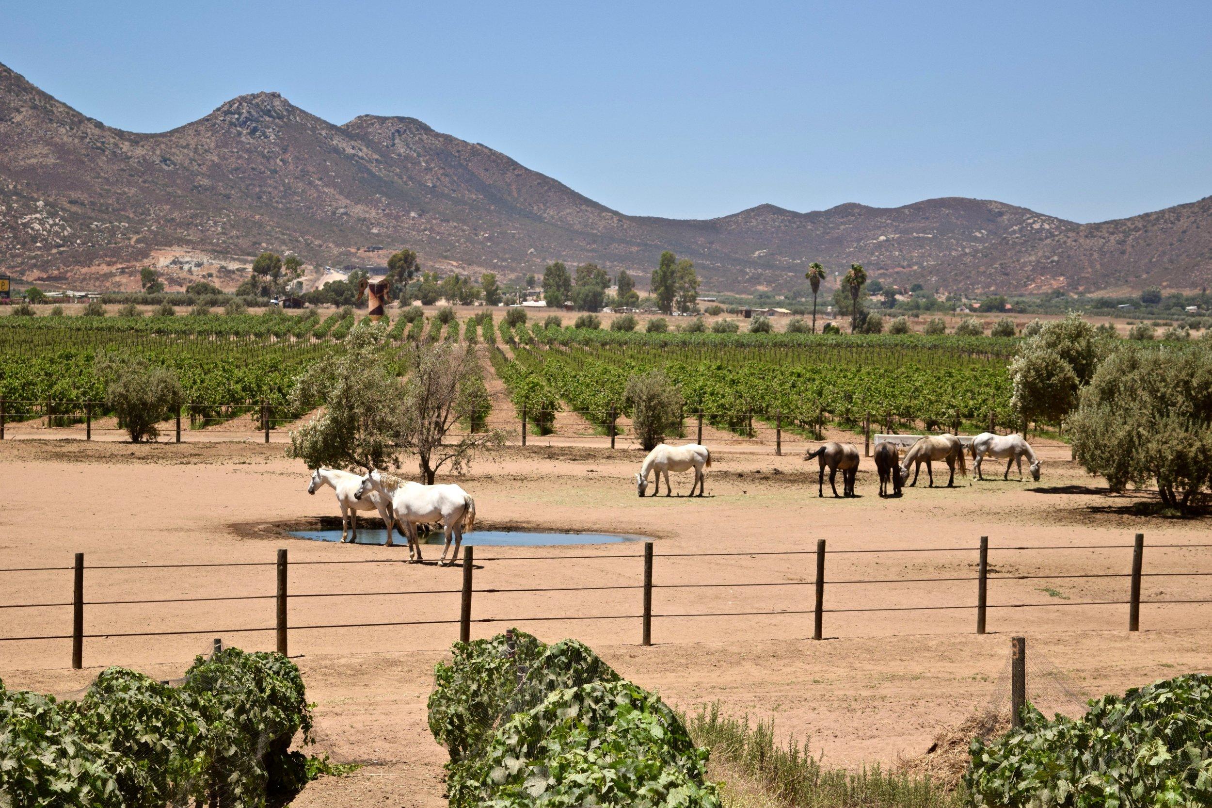adobe guadalupe- horses.jpg