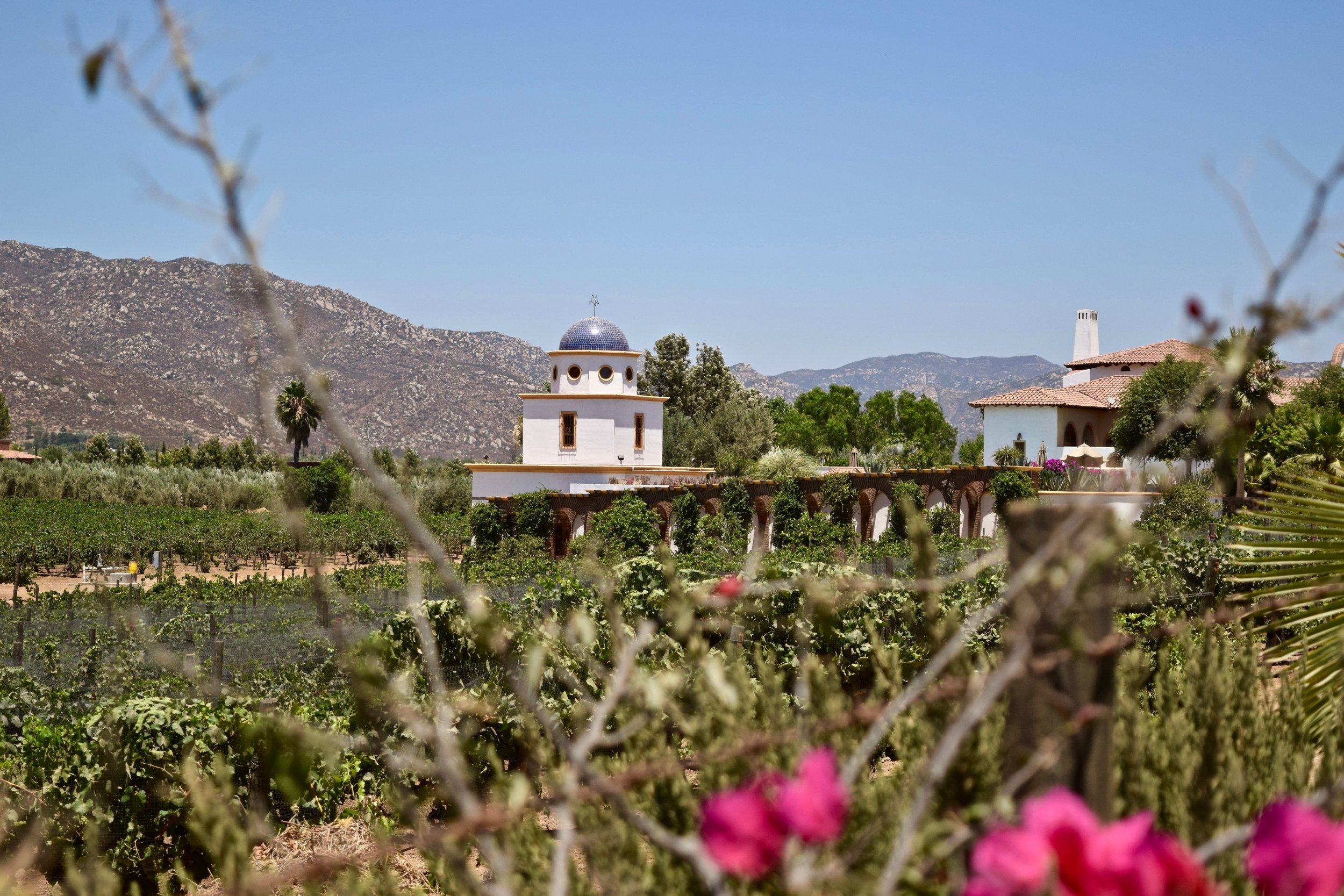 adobe guadalupe- vines & house.jpg