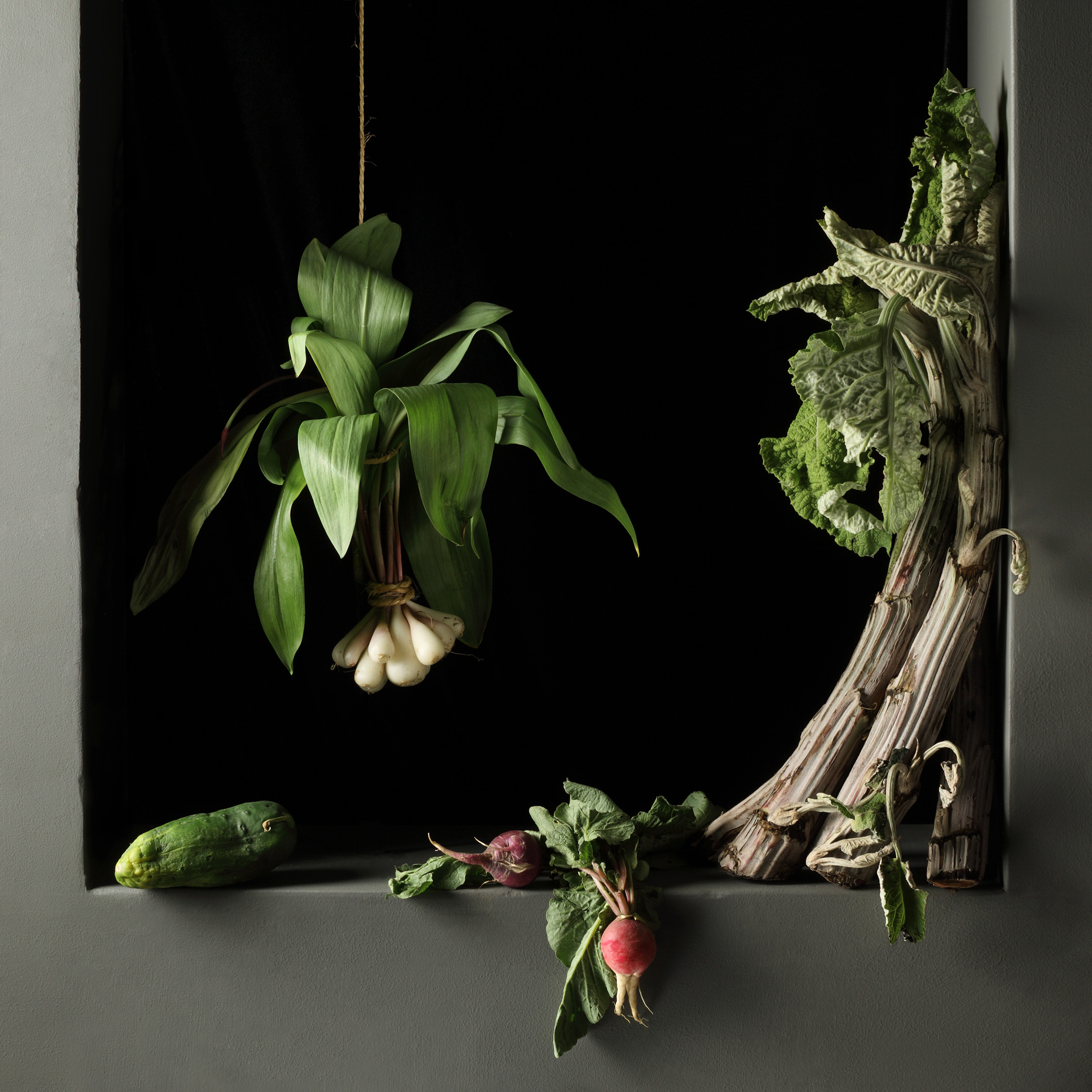 Cardoon and Radishes, After J.S.C., 2010