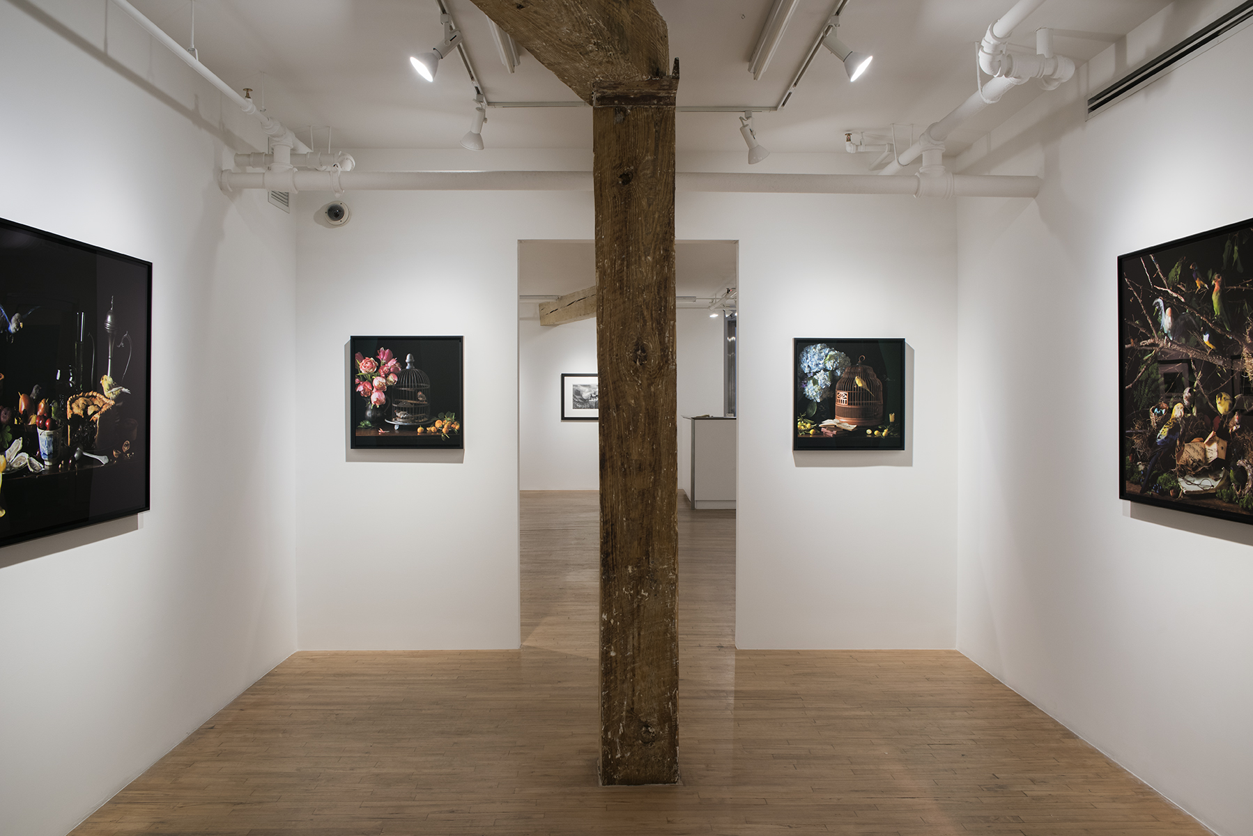 Robert Mann Gallery, New York